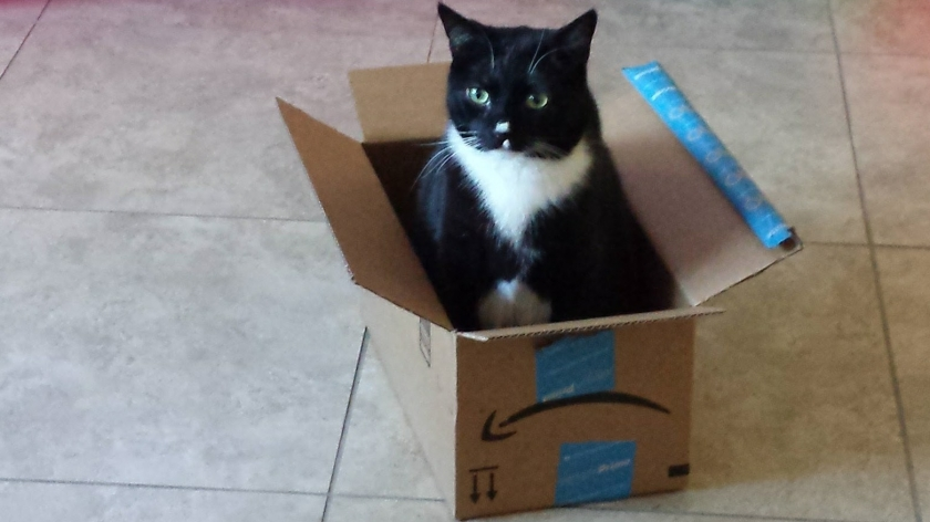 Chicago Cat in a Box